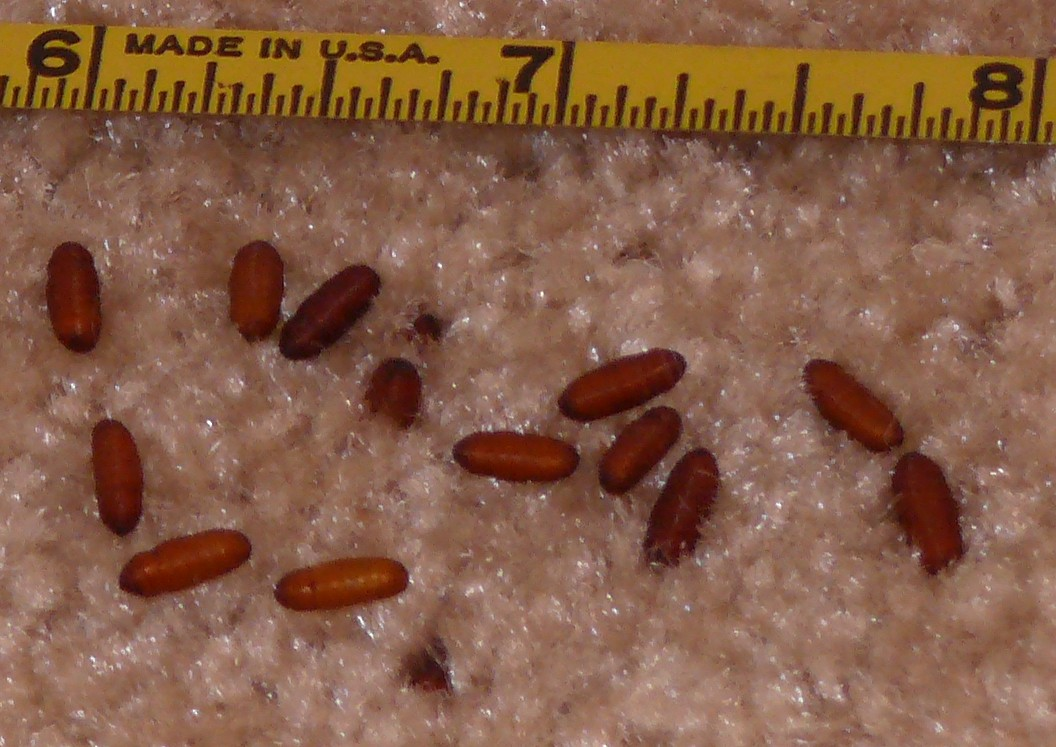 Maggots On Kitchen Floor Is There An Entomologist In The House Off Topic Unofficial